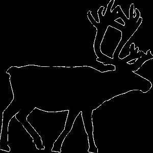 reindeer-48519_640