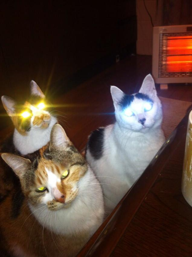 chat tueurs