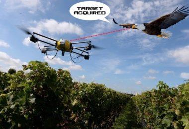 aigle chassant un drone - montage