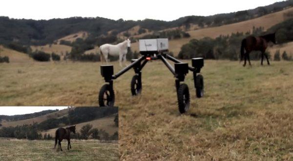 Un robot prend la place des cowboys de sidney en australie